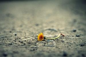 Disagio psicologico elaborazione del lutto e crisi