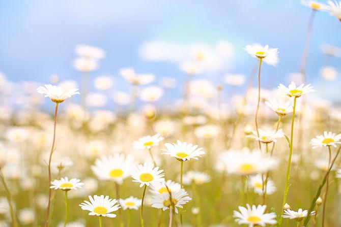 Alcune pratiche per liberare la mente e ristabilire nella propria vita armonia, equilibrio e benessere